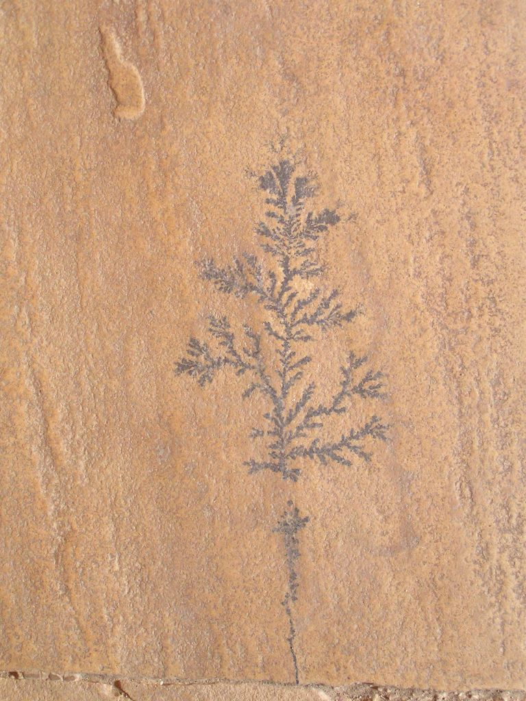 stone  pattern with fossilised plant