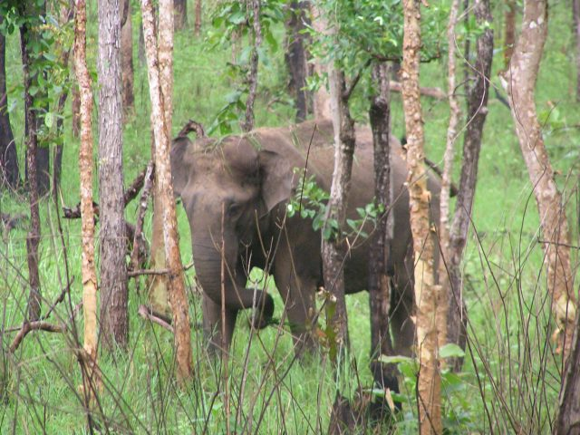 The angry elephant
