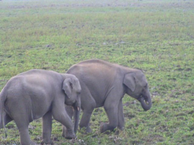 Babu and Rani...the baby elephants