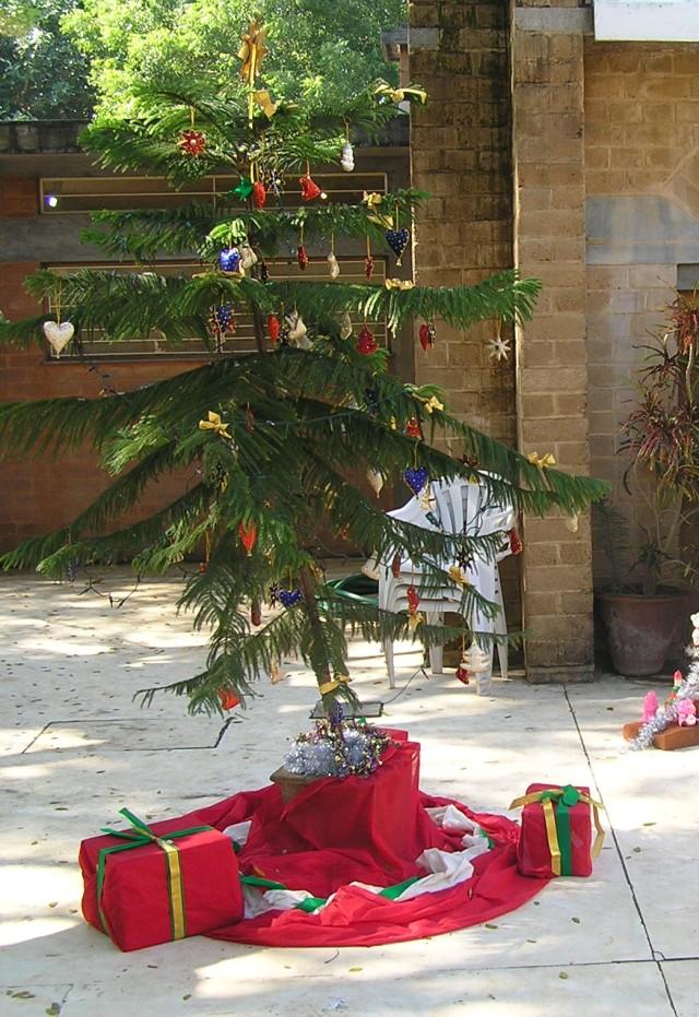 Christmas tree at ashram
